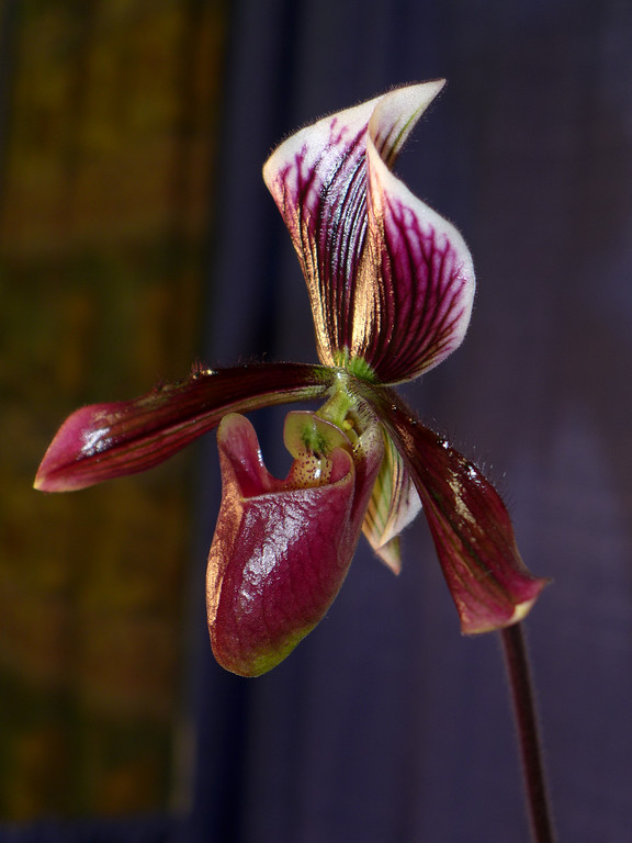 February 17 2013   Orchid