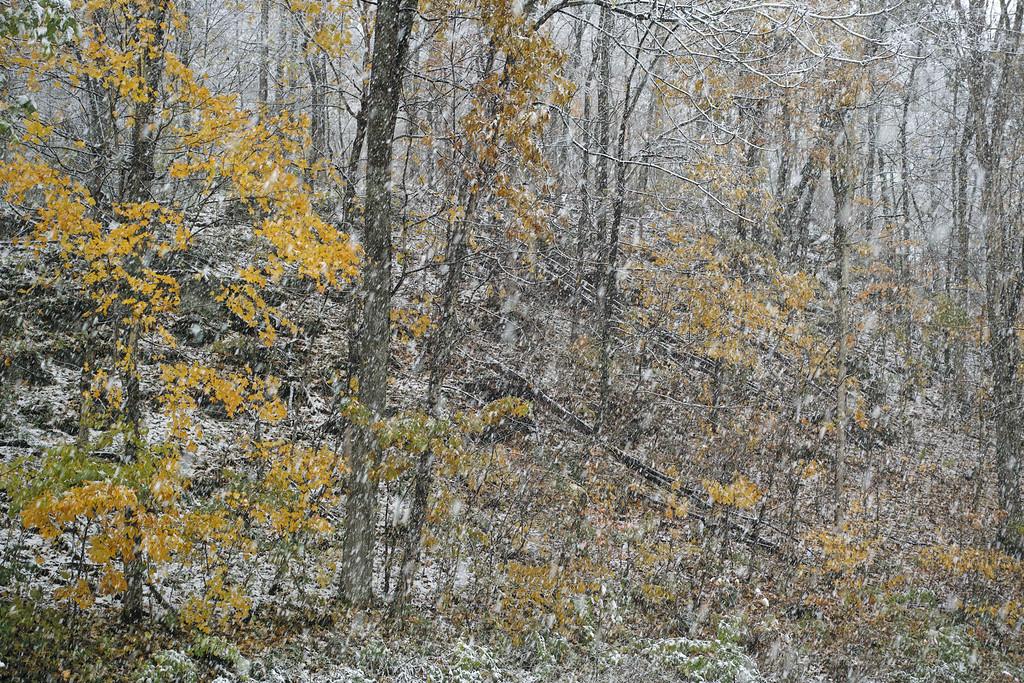 November 1 2014  Autumn snowstorm