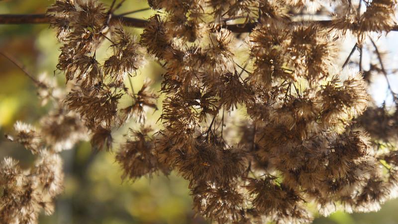 October 7 2011  Autumn seeds