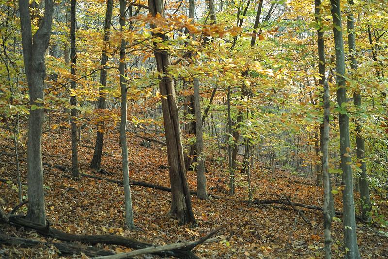 November 4 2014  Beech forest