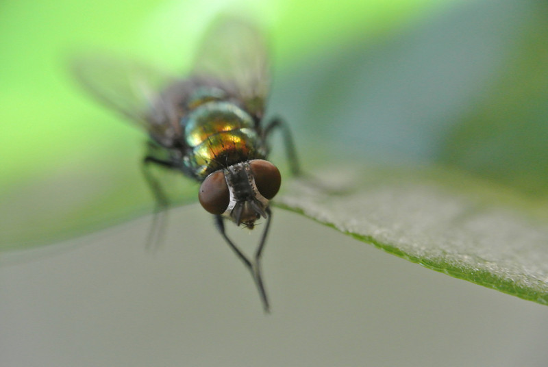 July 6 2013  Attentive Fly
