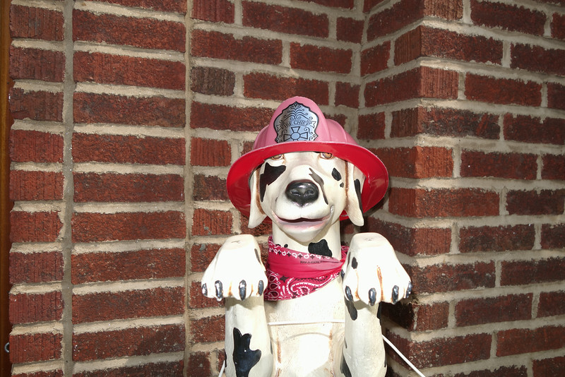 June 19 2014   Fire dog