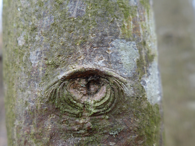 February 12 2013   The Forest Has Eyes