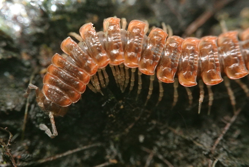 June 18 2013  Millipede Motion
