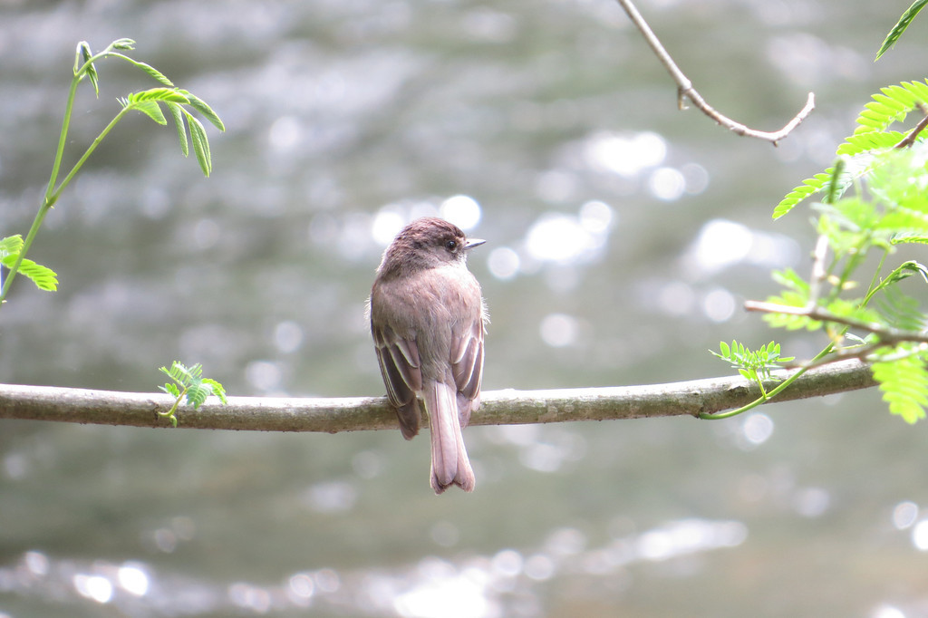 May 16 2014  Bird by the creek