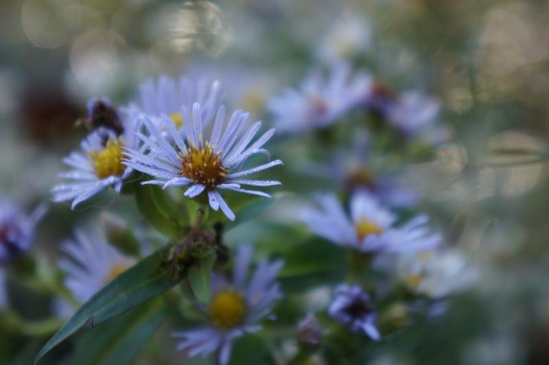 October 10 2012   Flower Refractions