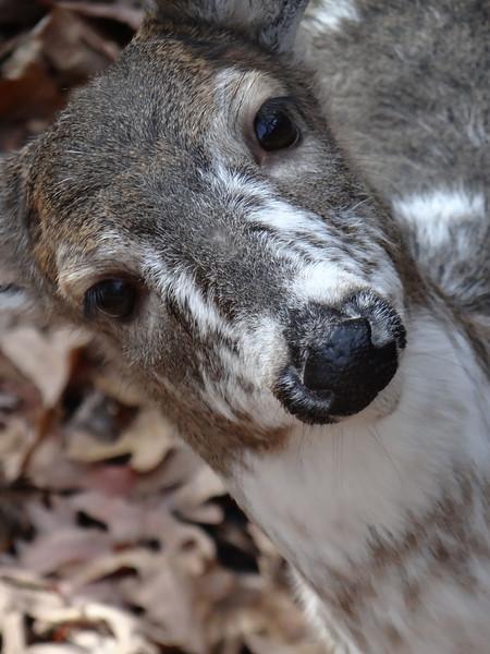 December 1 2012   Dear Deer
