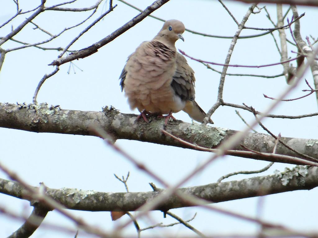 January 30 2013   Wind Ruffled Feathers