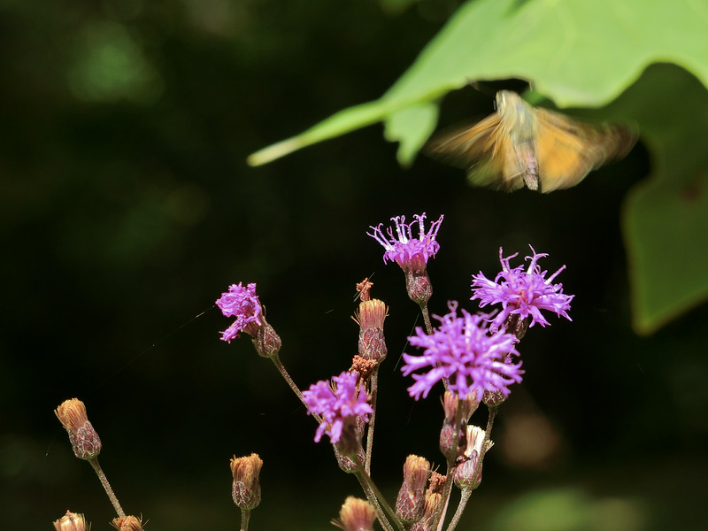 September 3 2014  Butterfly blur