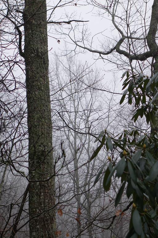 December 14 2013   Rain and fog