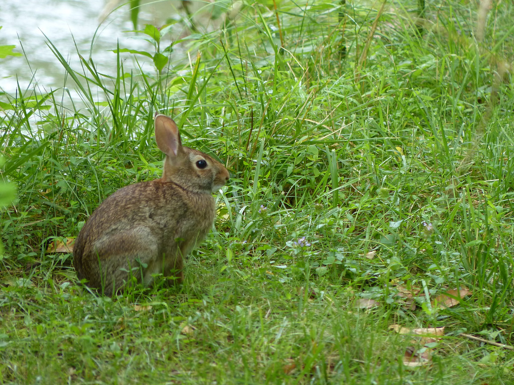 July 11 2013  Year of the Rabbit