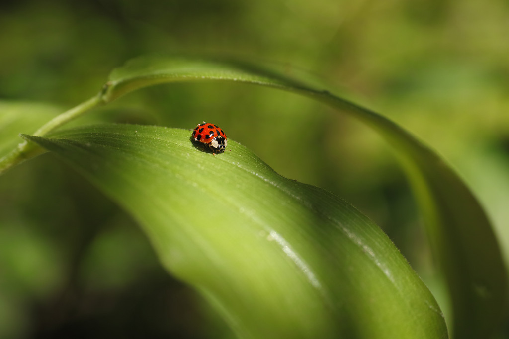 May 5 2014   Ladybug paused