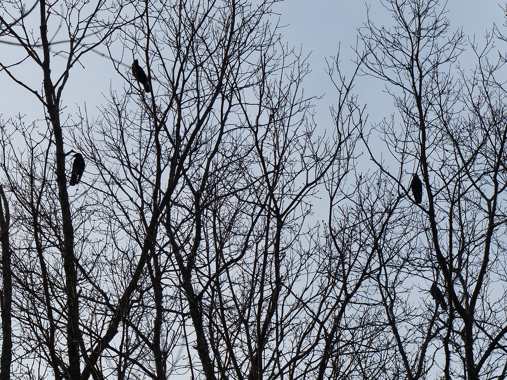 March 10 2013   Crow Convention