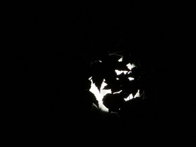June 23 2013  Supermoon Wrapped in Leaves