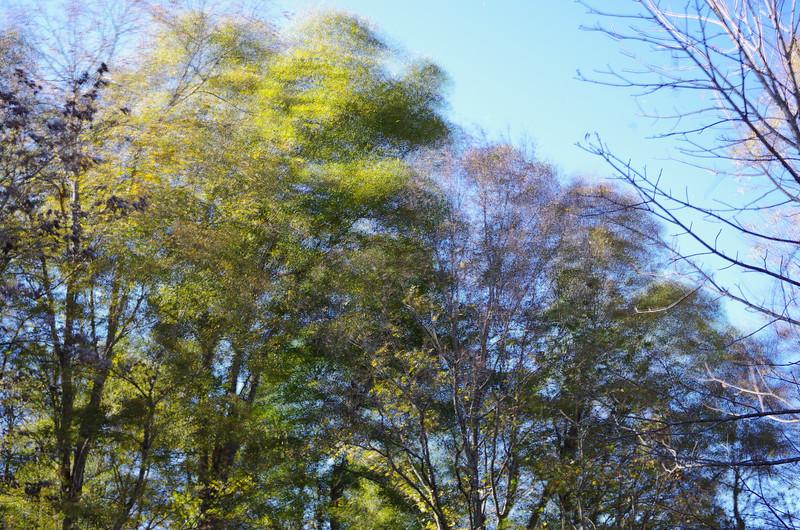 October 26 2013   Windy morning