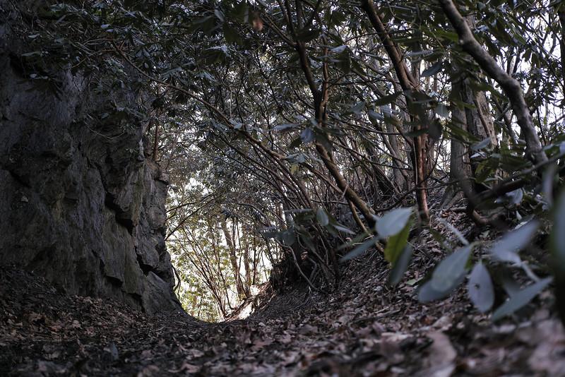 March 12 2013   Narrow Trail