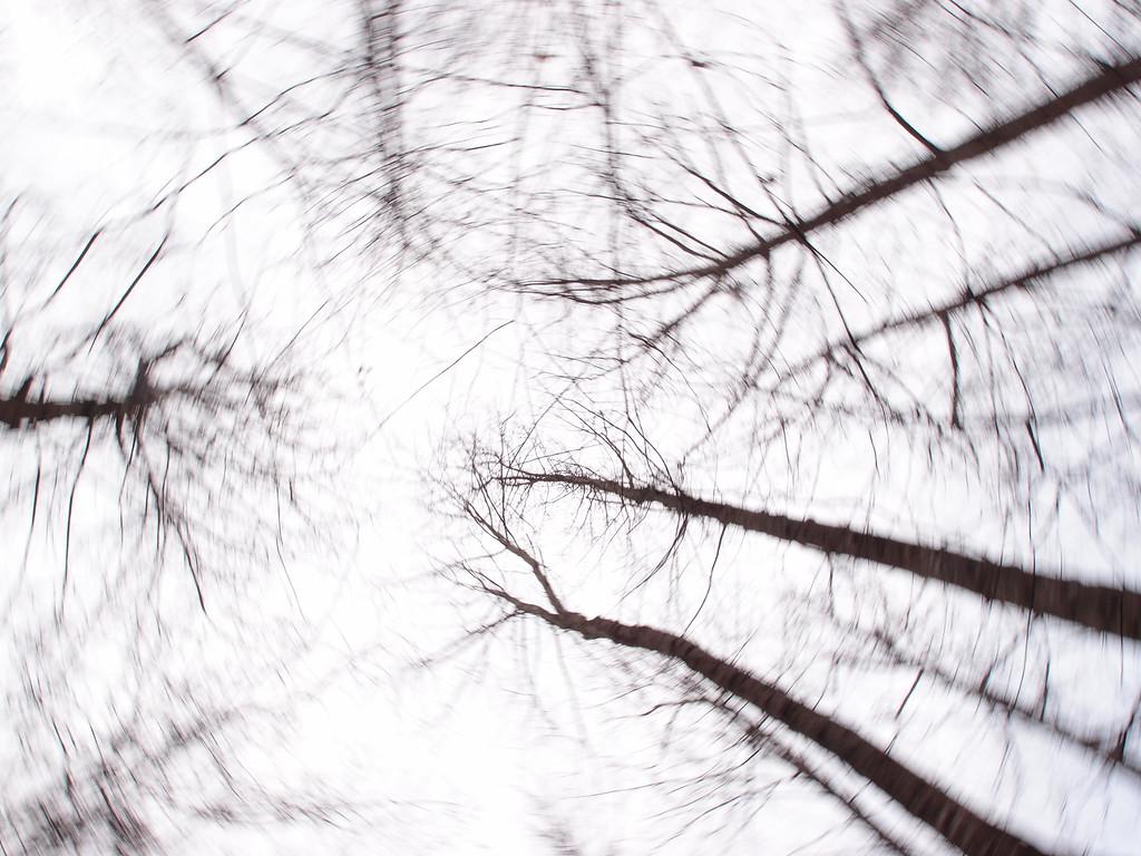 January 27 2013    Spinning Winter Trees