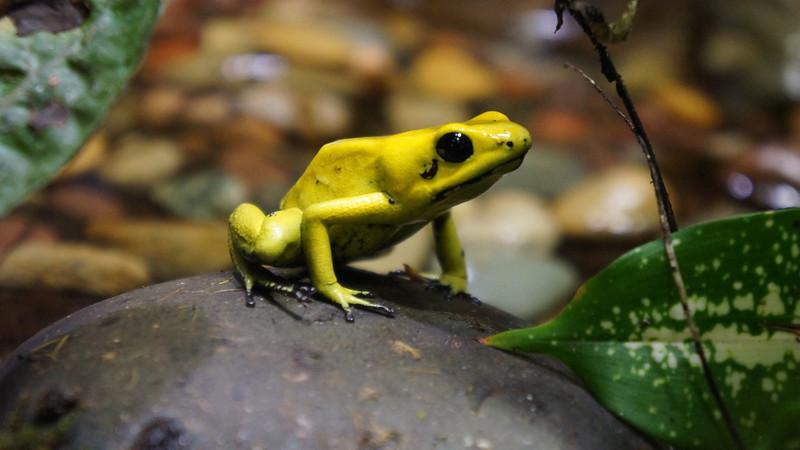 September 15 2011  Frog tears