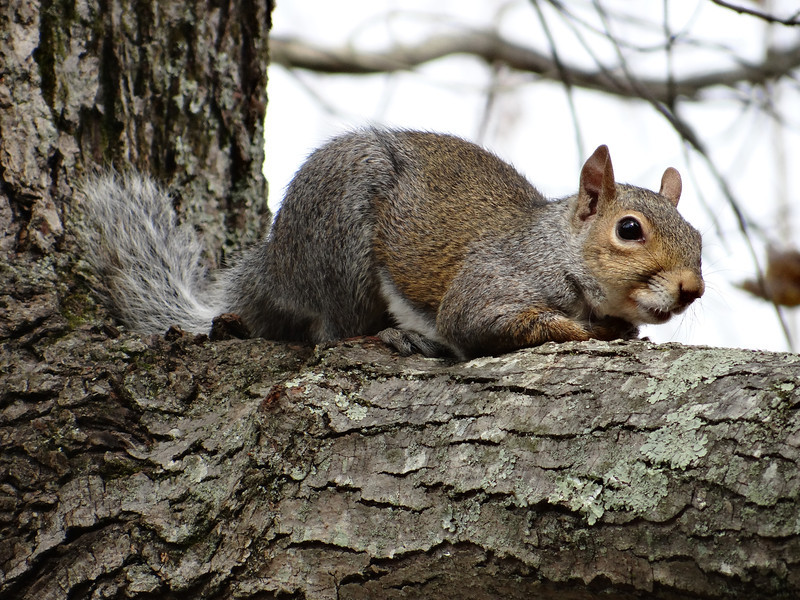 October 27 2012    Squirrely