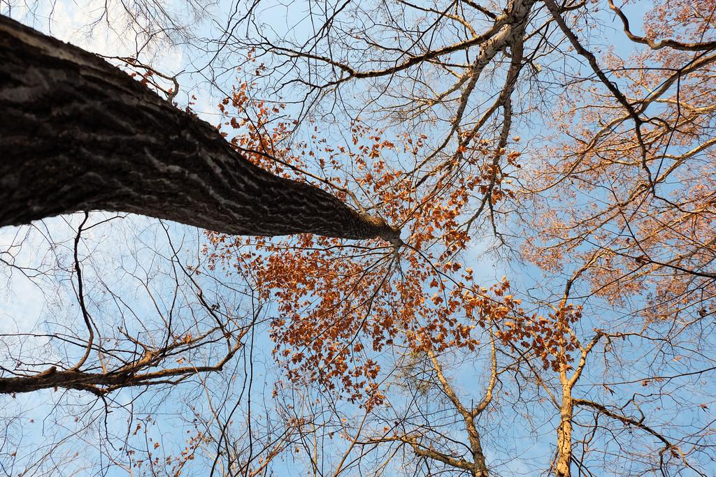November 28 2014  Beige forest