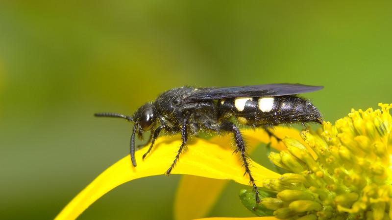 August 29 2011  Pollinator