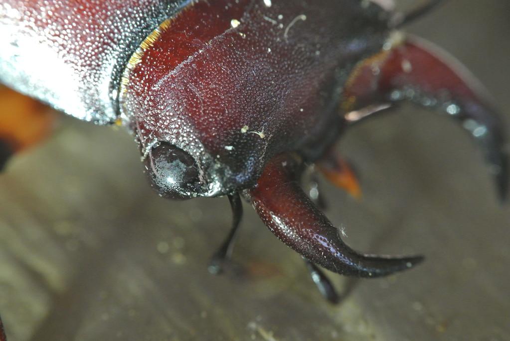 July 25 2013   Busy Beetle