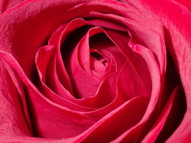 February 13 2015  Rose folds