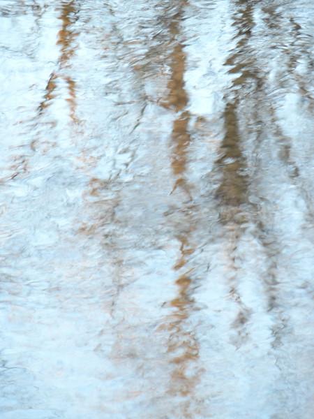 November 25 2012   Tree Echoes