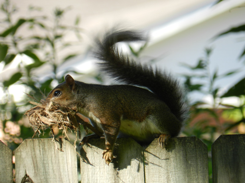 June 29 2011   Nesting season