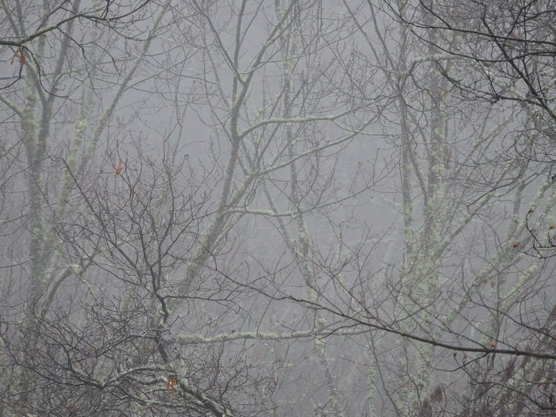 December 30 2014  Forest bathed in fog