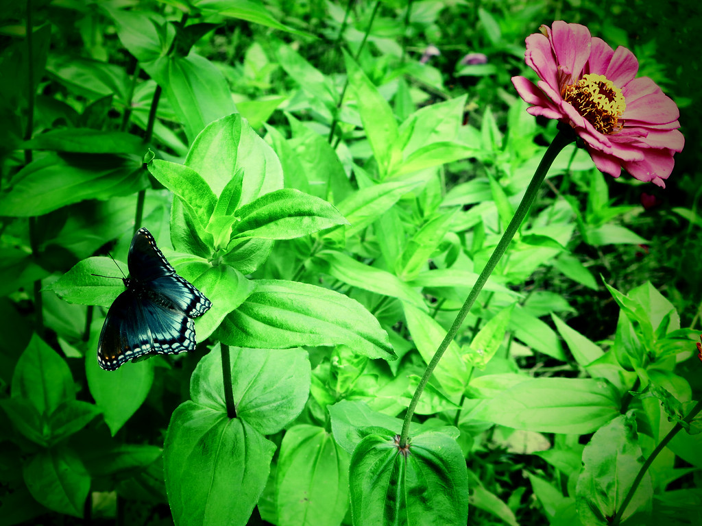 July 14 2013   Flower and Winged Flower