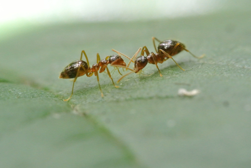 July 10 2013   Ant Talk