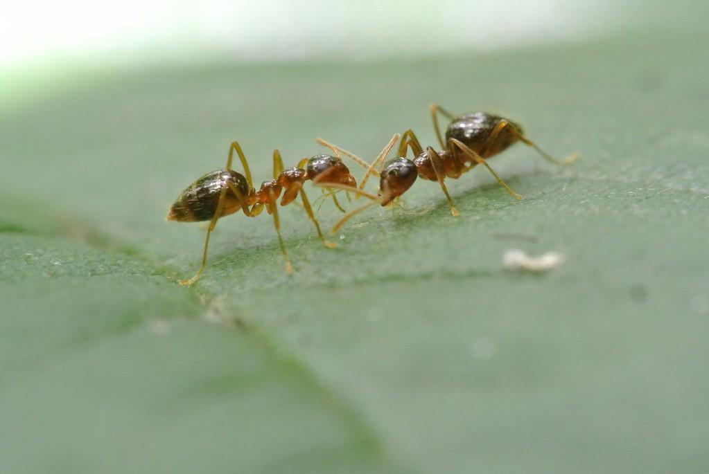 July 10 2013   Ant Talk