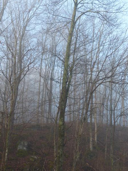 April 1 2013   Morning Fog