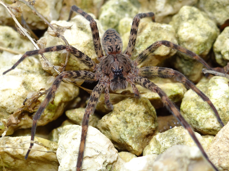 June 20 2011  Spider glare