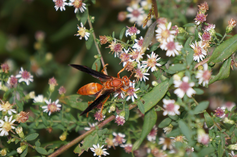 October 14 2012   Wasp Feast