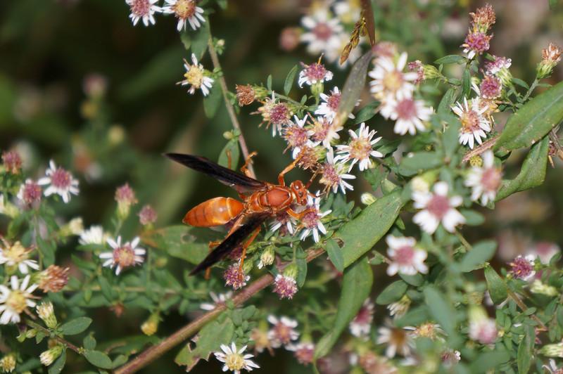 October 14 2012   Wasp Feast