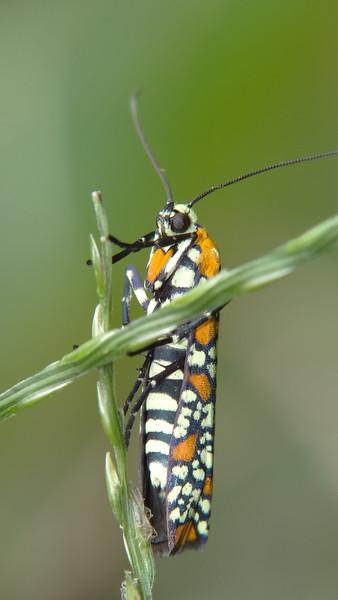 September 7 2011  Bright bug