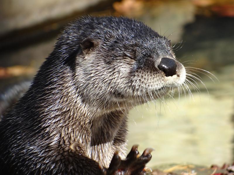 November 17 2012   Otter Yoga