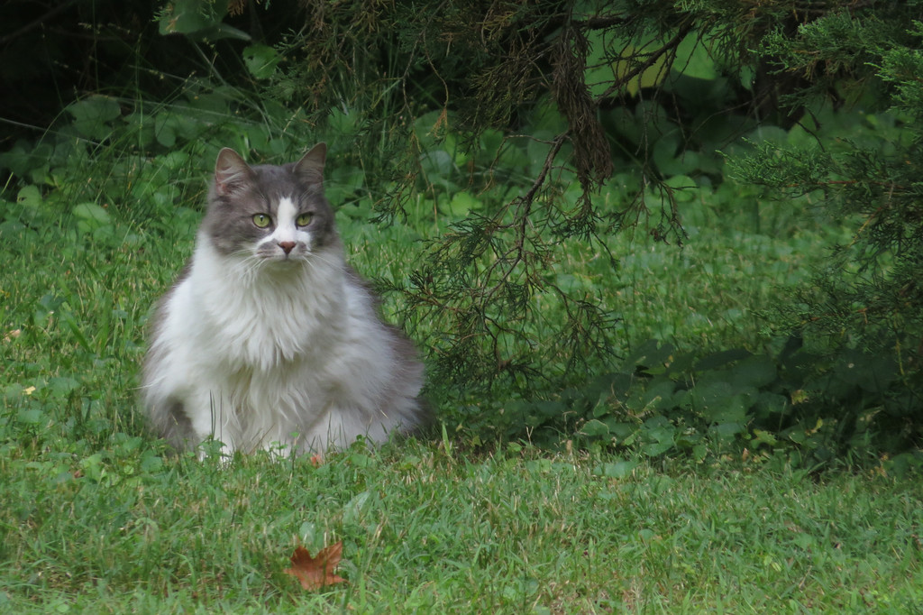 June 27 2014  Neighbor cat