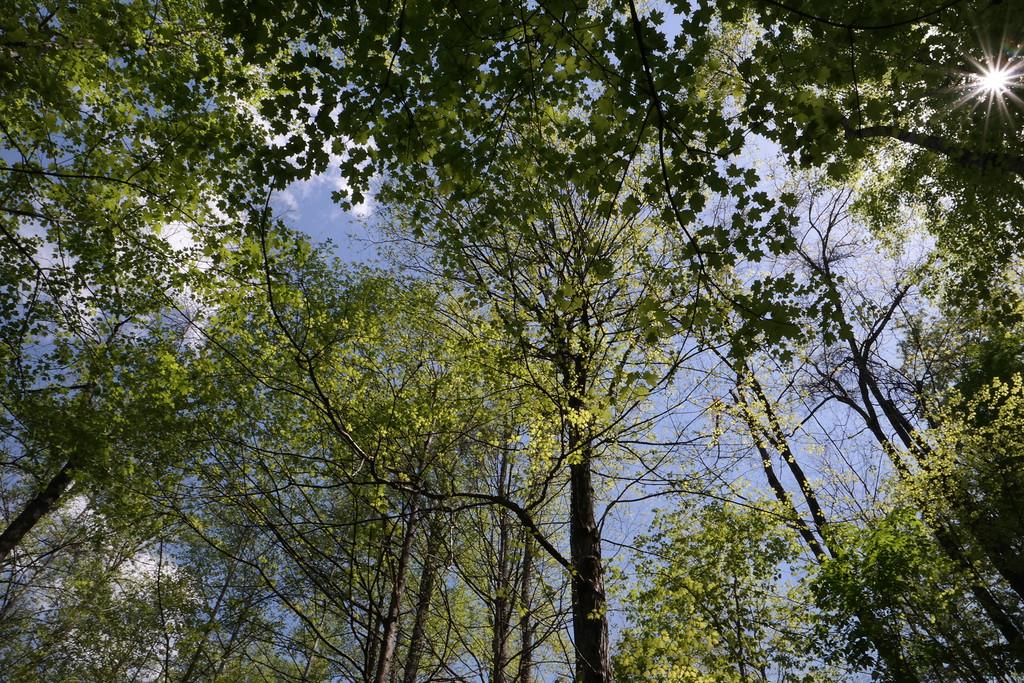 April 21 2015 Sunshine through the trees
