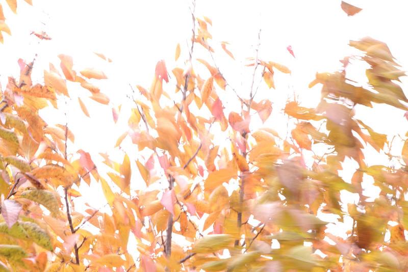 October 31 2013   Winds of Halloween