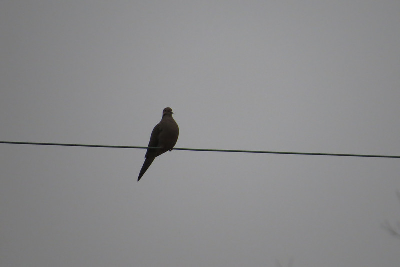 March 6 2014   Bird on wire