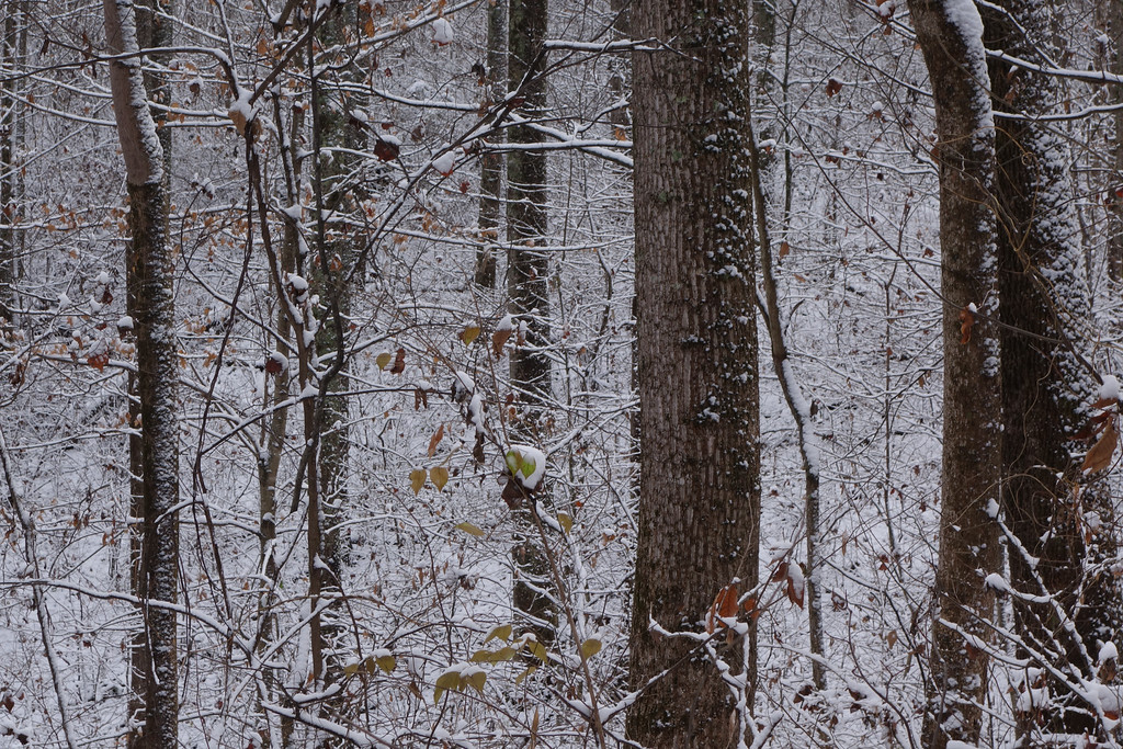 November 27 2013  First snow of the season