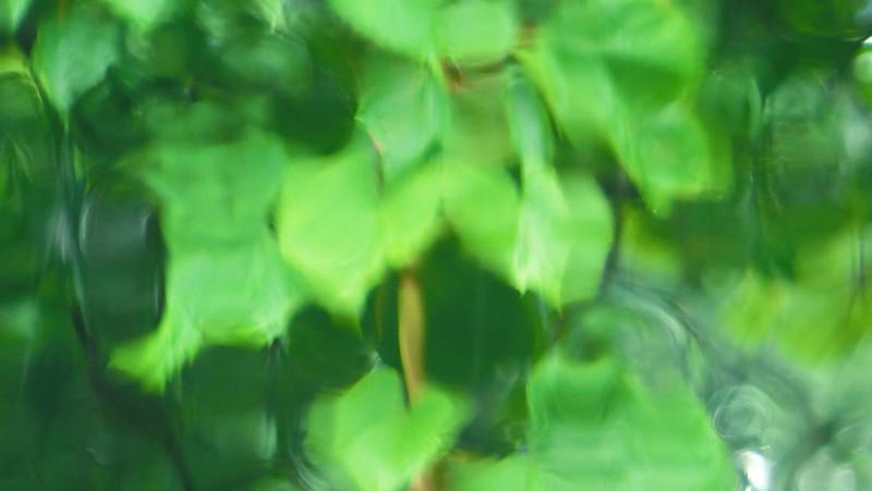 September 4 2011  Leaf rain