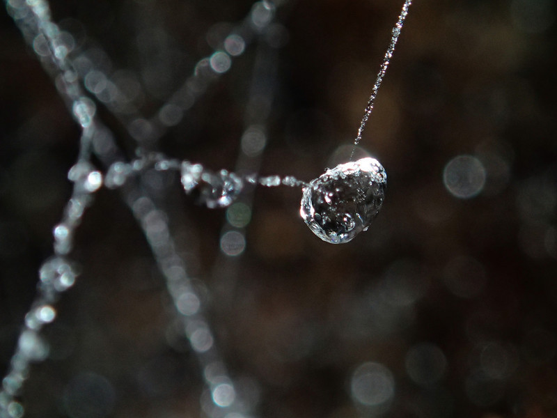March 18 2014   Ice jeweled spider web