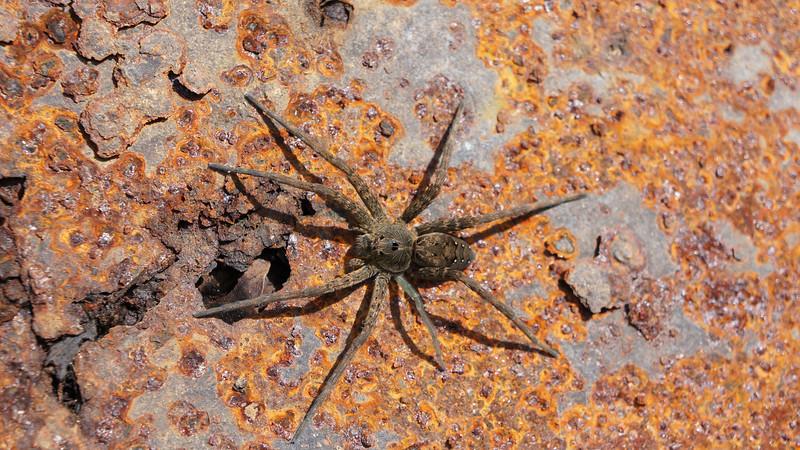 September 28 2011  Rusty spider