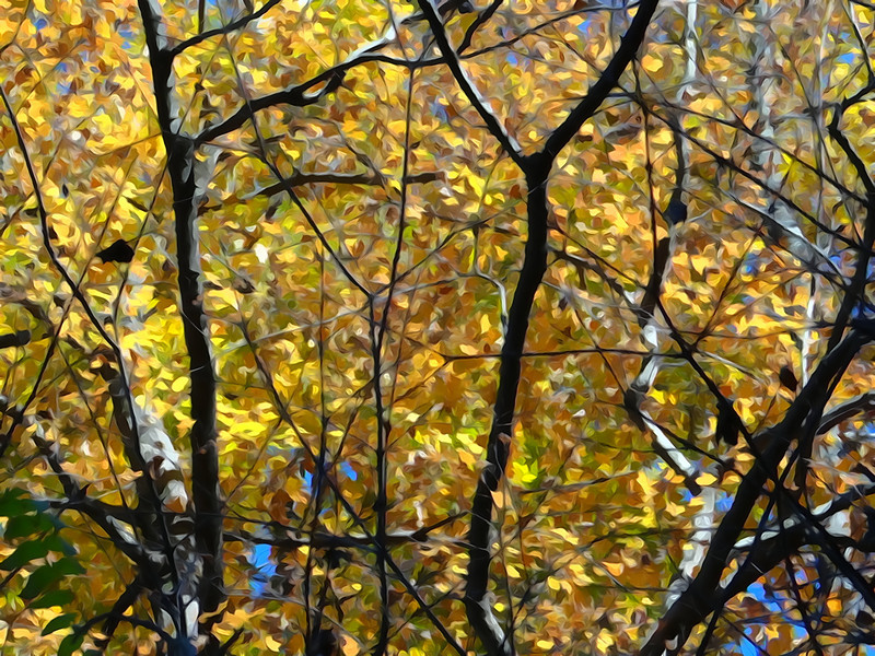 October 24 2012   Dappled Leaves
