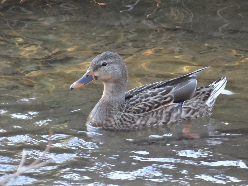 November 28 2012   Duck Dusk