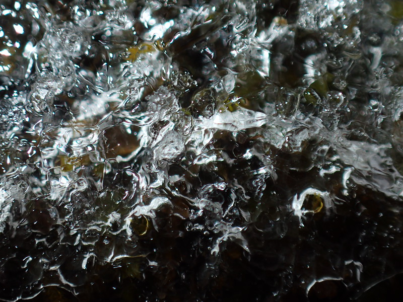 January 27 2015  Moss encased in ice